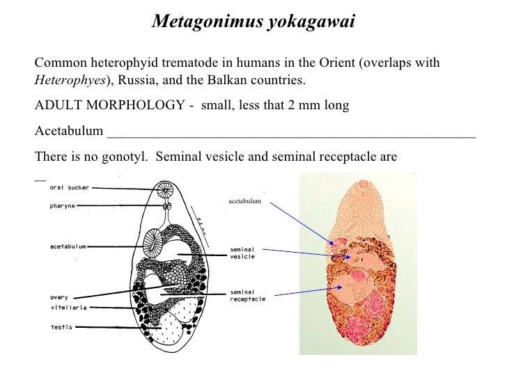 Digestive Trematodes