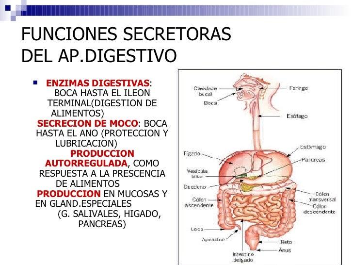 Digestivo Iii