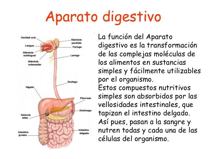 Aparato digestivo - Introducción
