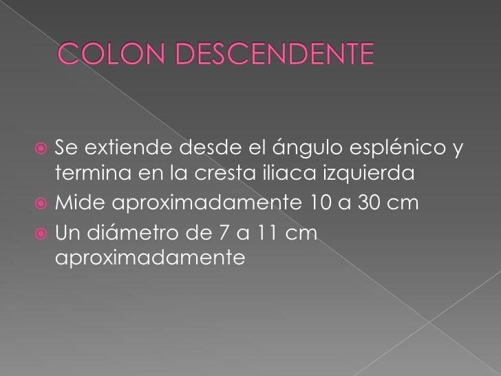 COLON DESCENDENTE<br />Se extiende desde el ángulo esplénico y termina en la cresta iliaca izquierda<br />Mide aproximadam...