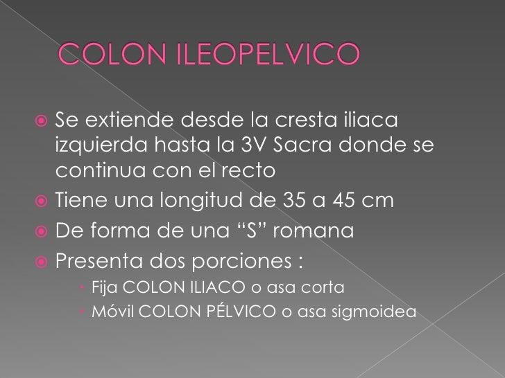 COLON ILEOPELVICO<br />Se extiende desde la cresta iliaca izquierda hasta la 3V Sacra donde se continua con el recto<br />...
