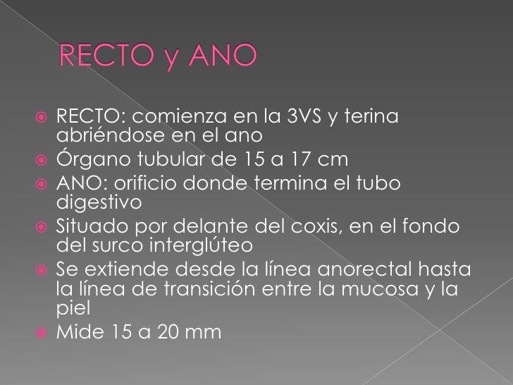 RECTO y ANO<br />RECTO: comienza en la 3VS y terina abriéndose en el ano<br />Órgano tubular de 15 a 17 cm<br />ANO: orifi...
