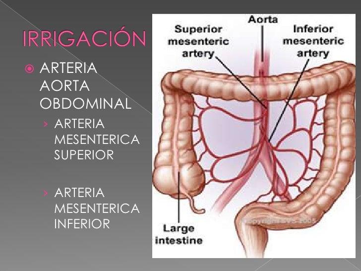 IRRIGACIÓN<br />ARTERIA AORTA OBDOMINAL<br />ARTERIA MESENTERICA SUPERIOR<br />ARTERIA MESENTERICA INFERIOR<br />