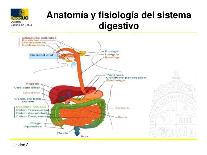 Digestivo ans 1100[1]