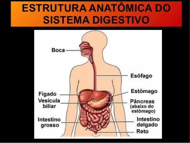 Digestão E Absorção De Nutrientes