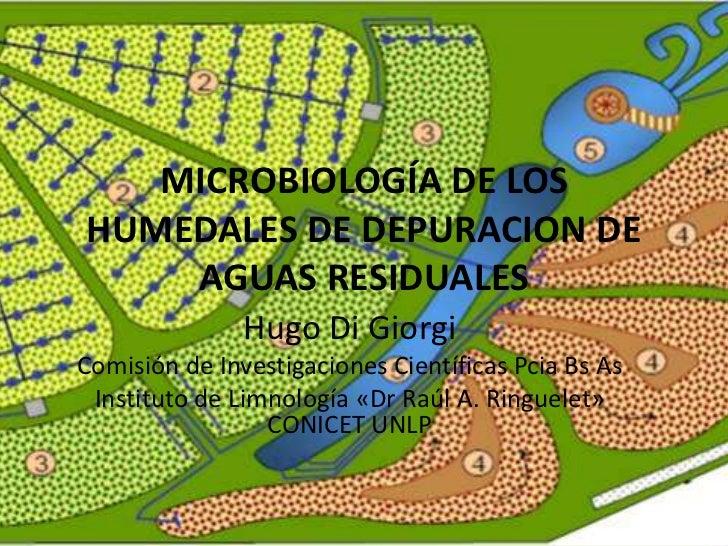 MICROBIOLOGÍA DE LOSHUMEDALES DE DEPURACION DE    AGUAS RESIDUALES               Hugo Di GiorgiComisión de Investigaciones...