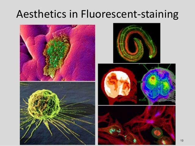 Aesthetics in Fluorescent-staining                                     13