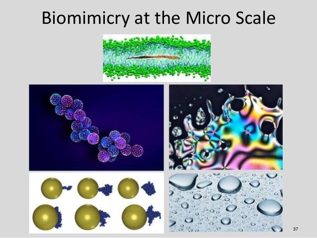 Biomimicry at the Micro Scale                                37