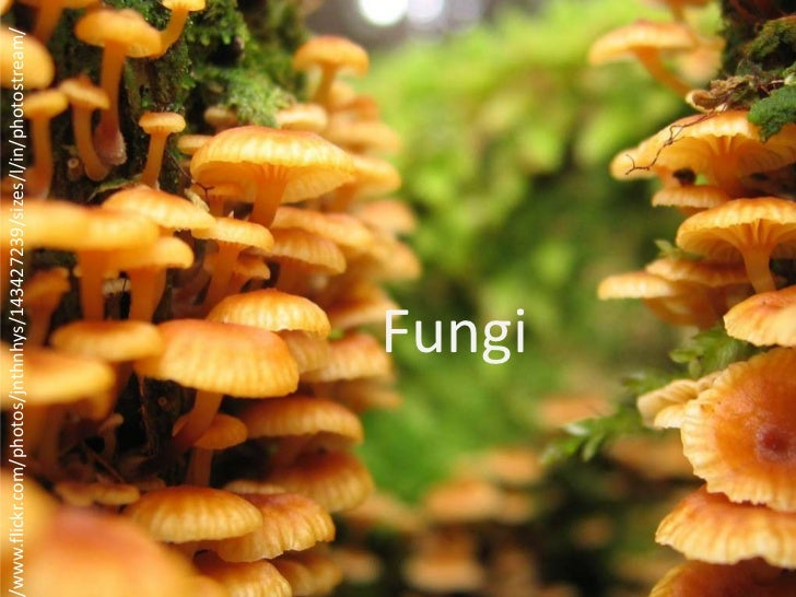 www.flickr.com/photos/jnthnhys/143427239/sizes/l/in/photostream/                         Fungi