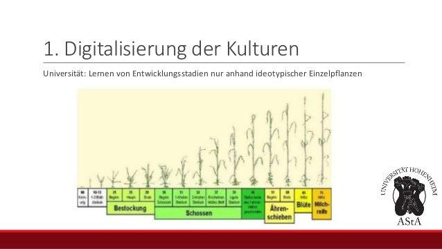 1. Digitalisierung der Kulturen Universität: Lernen von Entwicklungsstadien nur anhand ideotypischer Einzelpflanzen