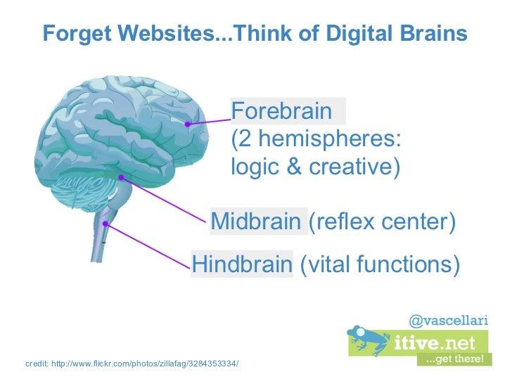 Forget Websites...Think of Digital Brains                                                      Forebrain                  ...