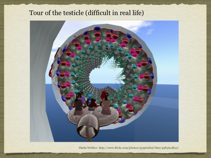 Tour of the testicle (difficult in real life)                   Sheila Webber http://www.flickr.com/photos/23396182@N00/43...