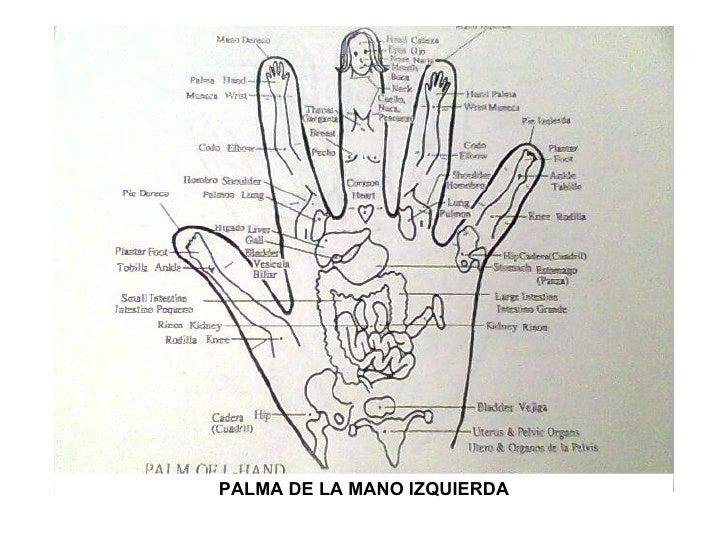 Reflexologia en las manos pdf free
