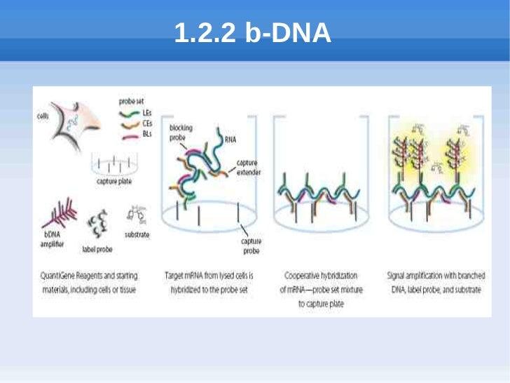 1.2.2 b-DNA