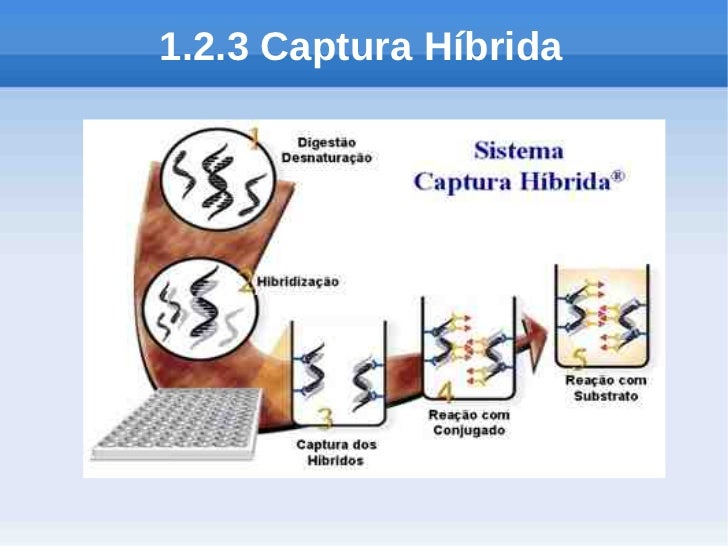 1.2.3 Captura Híbrida