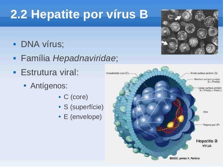 2.2 Hepatite por vírus B   DNA vírus;   Família Hepadnaviridae;   Estrutura viral:       Antígenos:                  ...