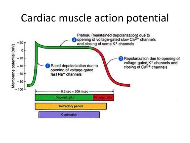 congestive cardiac failure with digoxin toxicity ß adrenergic receptor agonists have had limited use in chronic management of congestive heart failure in congestive failure, a digitalis toxicity central.