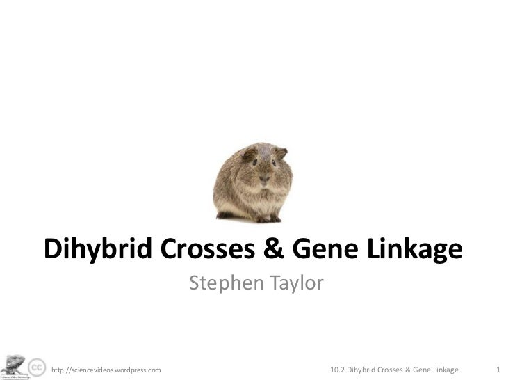 Dihybrid Crosses & Gene Linkage<br />Stephen Taylor<br />10.2 Dihybrid Crosses & Gene Linkage<br />1<br />http://sciencevi...
