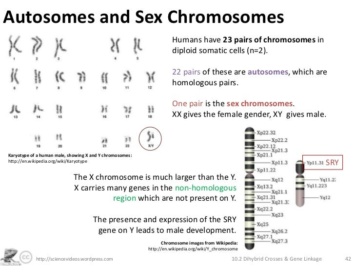 differentiate autosomal and sex chromosome in Hayward