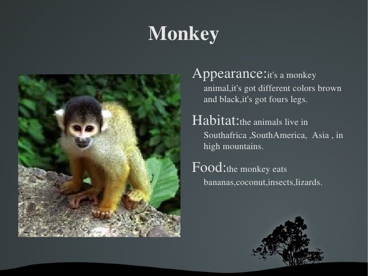 Monkey <ul><li>Appearance: it's a monkey animal,it's got different colors brown and black,it's got fours legs.