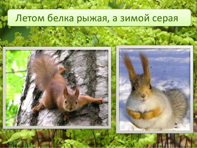 Картинки белки летом и зимой