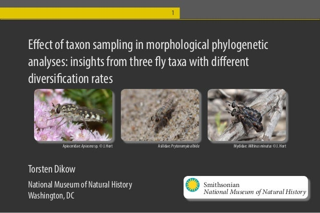 1  Effect of taxon sampling in morphological phylogenetic analyses: insights from three fly taxa with different diversific...