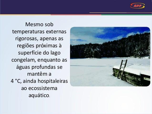 Mesmo sob temperaturas externas rigorosas, apenas as regiões próximas à superfície do lago congelam, enquanto as águas pro...
