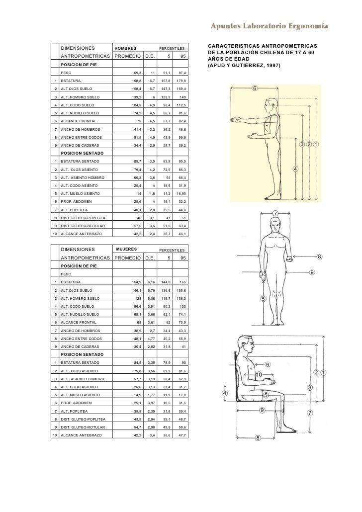 dimensiones antropometricas