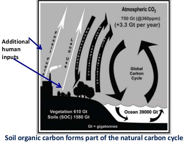 Effect of global warming on soil organic carbon for Soil organic carbon