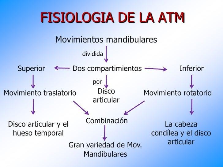 Asombroso Diagrama De La Anatomía De La Atm Composición - Anatomía ...