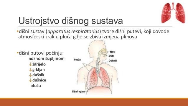 Dišni sustav Slide 2