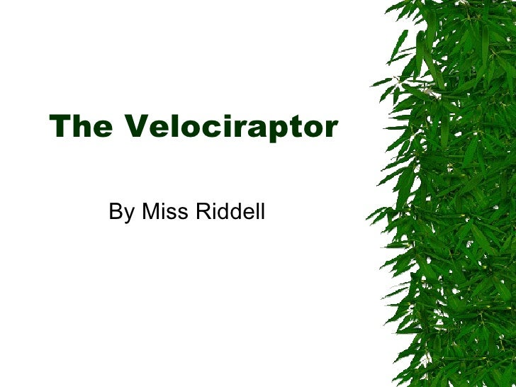 The Velociraptor By Miss Riddell