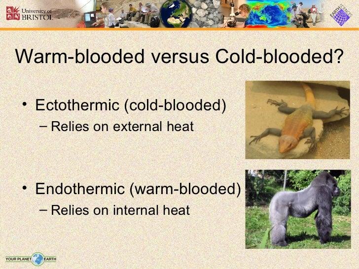 ectothermic animals