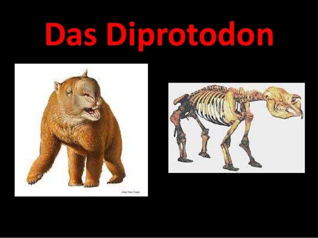 Das Diprotodon