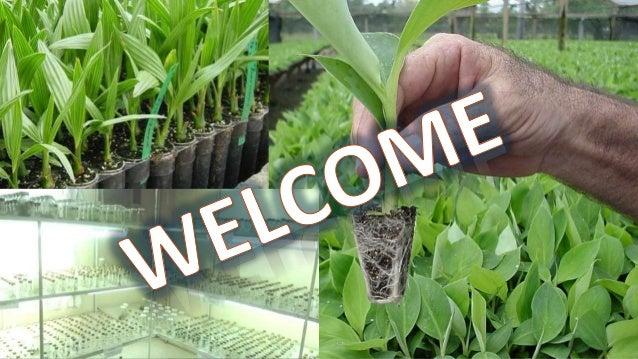 Pawan Kumar Nagar M.Sc. (Horti.) Fruit science, IInd Semester REG. NO: 04-2690-2015 Direct organogenesis, embryogenesis, m...