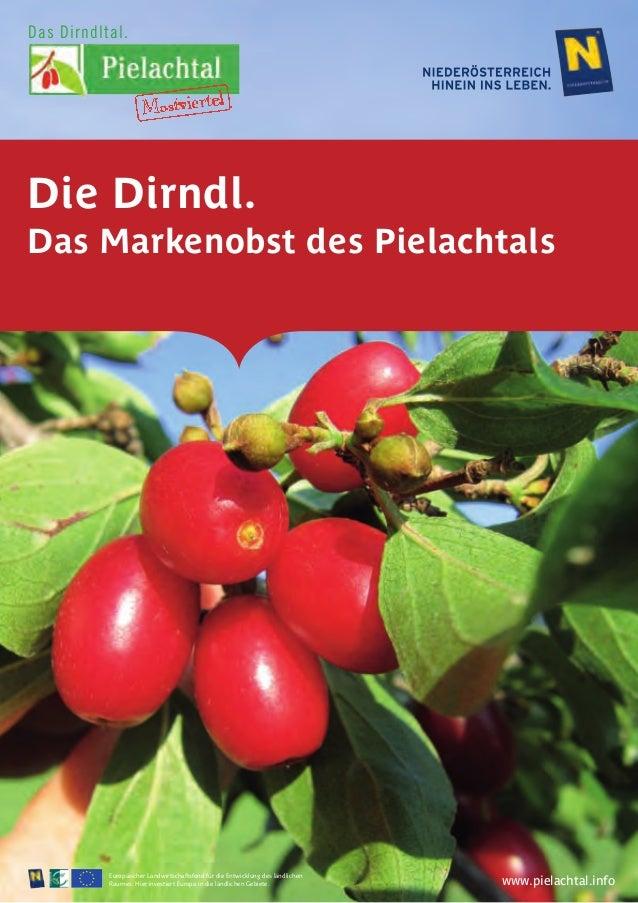 Die Dirndl Die Dirndl ist mit Recht das Markenobst des Pielachtales. Diese sympathische kleine Frucht mit ihrem seltsam an...