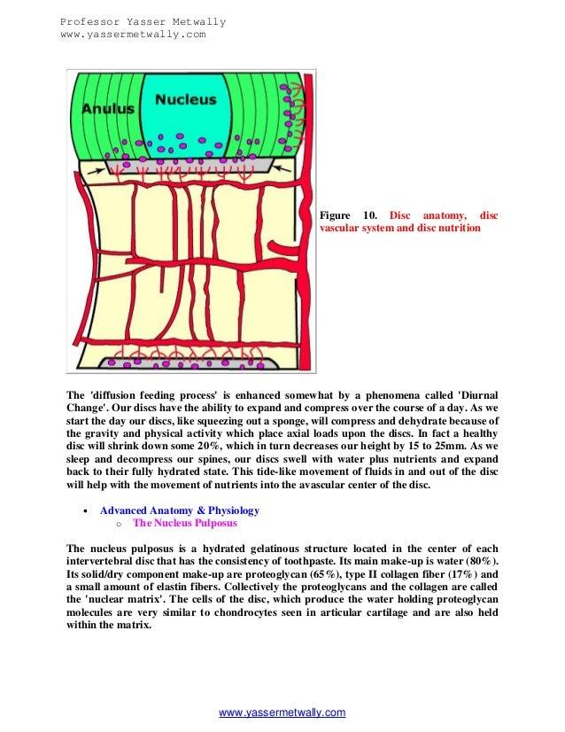 Pathologypathogenesis Of Lumbar Disc Degeneration