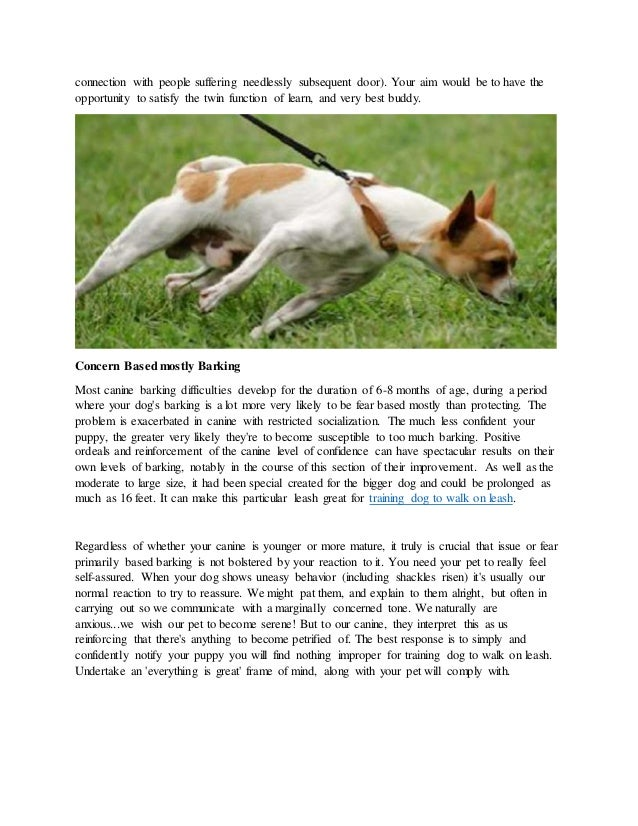 Discover how to stop your dog from barking and training dog to walk on leash Slide 2