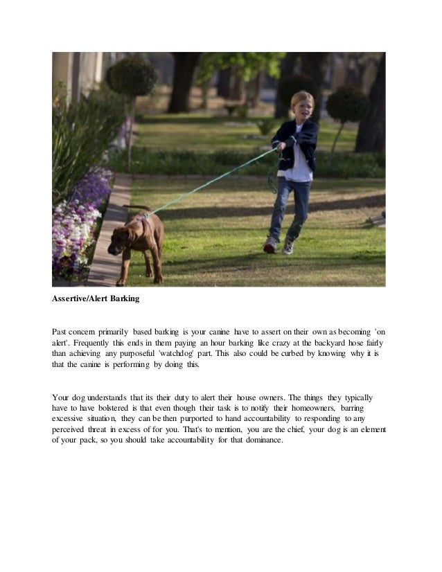 Discover how to stop your dog from barking and training dog to walk on leash Slide 3