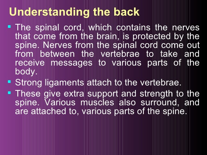 Understanding the back <ul><li>The spinal cord, which contains the nerves that come from the brain, is protected by the sp...