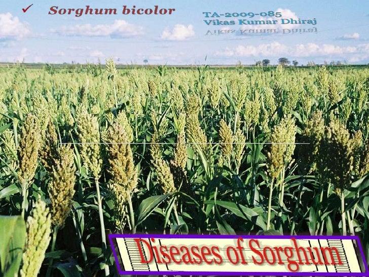 S.N                      Diseases                               Causal organism1     Anthracnose or Red leaf spot         ...