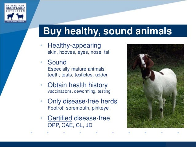apfelessig gegen parasiten beim hund.jpg