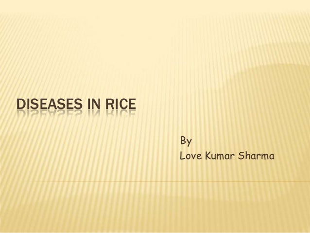 DISEASES IN RICEByLove Kumar Sharma