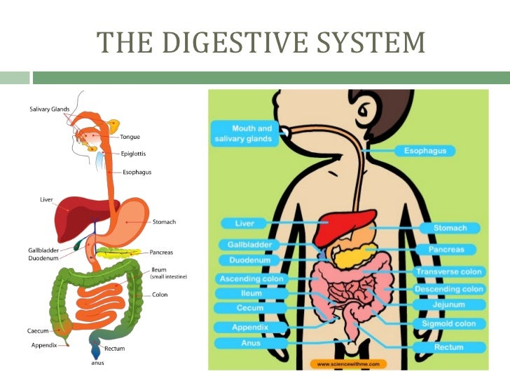 DISEASES IN THE DIGESTIVE SYSTEM - Student Nurses