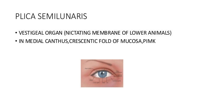 Diseases of conjunctiva ppt ophthalmology