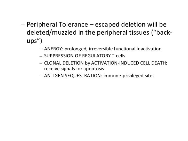"""<ul><ul><li>Peripheral Tolerance – escaped deletion will be deleted/muzzled in the peripheral tissues (""""back-ups"""") </li></..."""
