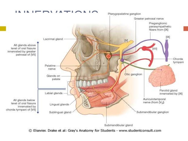 Diseases Of Salivary Gland