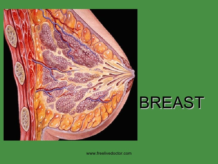 BREAST www.freelivedoctor.com