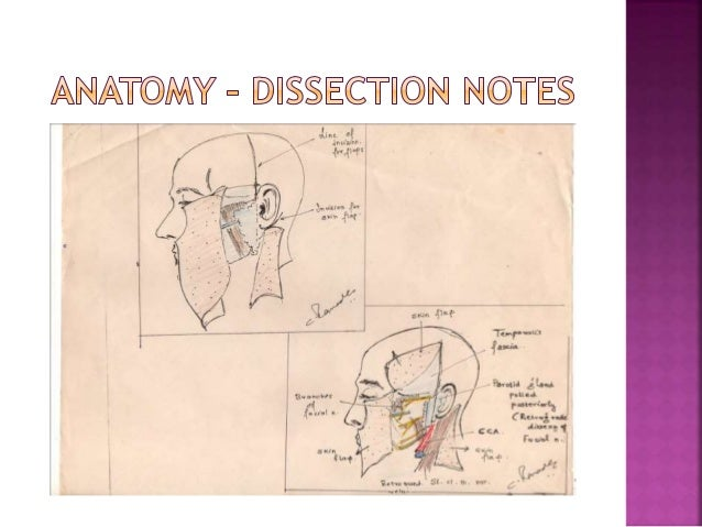 Diseases of the ear nose and throat a work book floor mouth pharynx schematic pharynx schematic ccuart Gallery