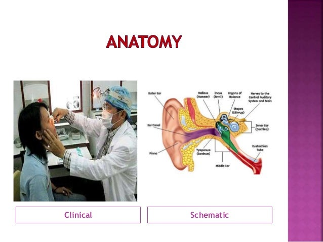 Dhingra ENT: Diseases of Ear Nose Throat PDF